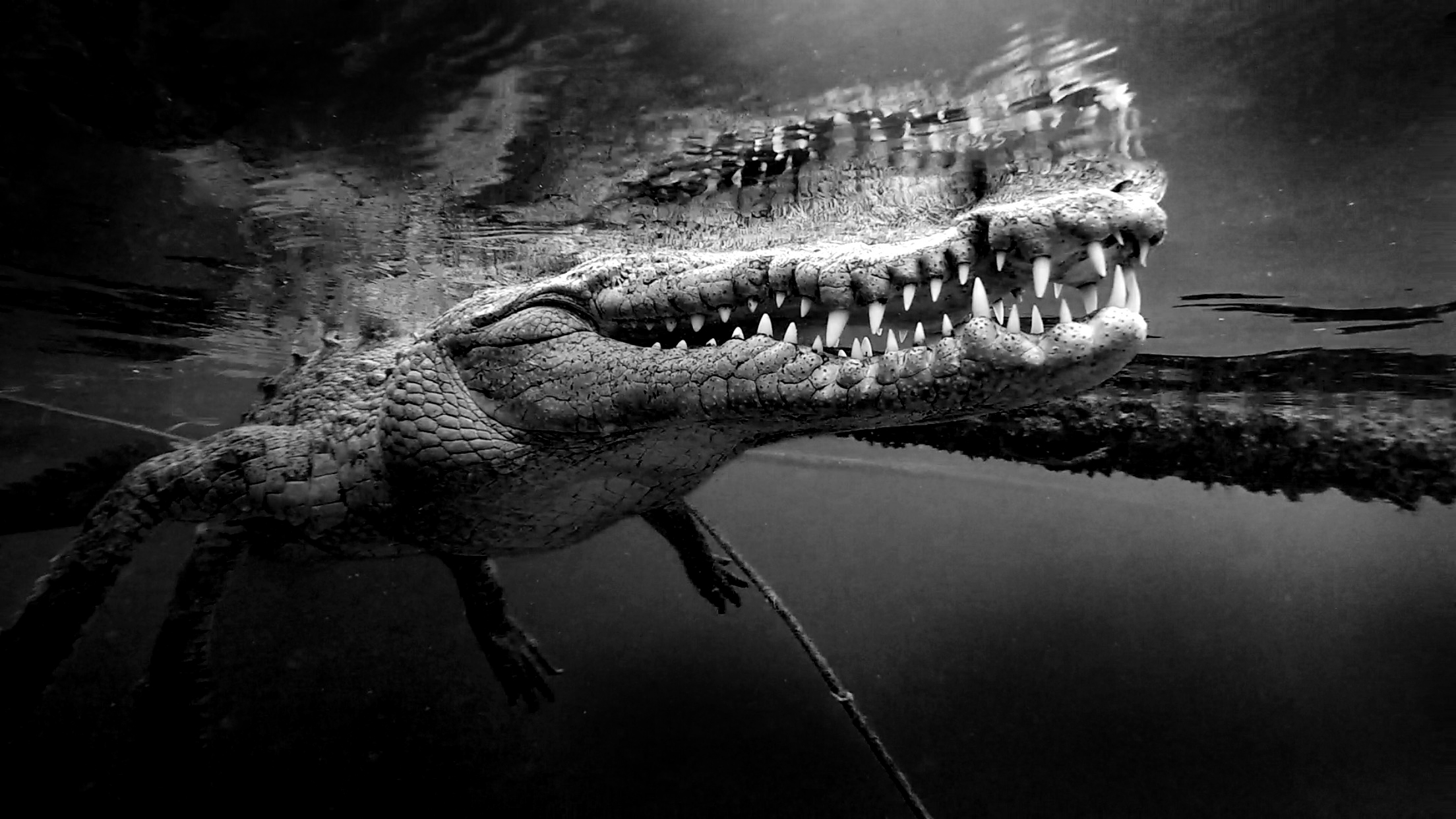 Crocodile up close
