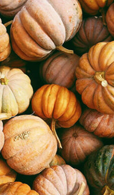 Jump in Season image of pumpkins and squash