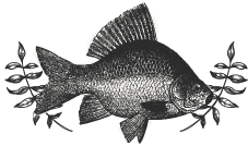 Fish-Engraving