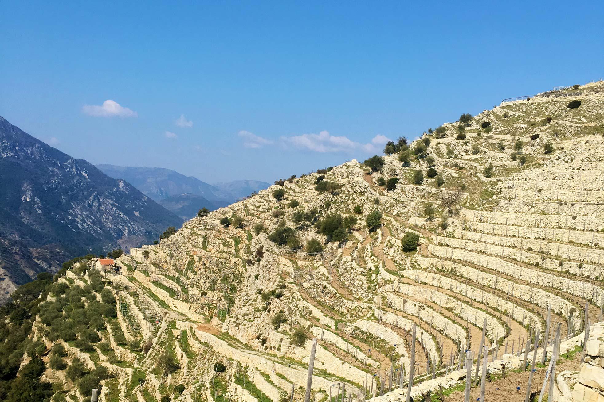 A Trincea Winery in Ventimiglia Italy