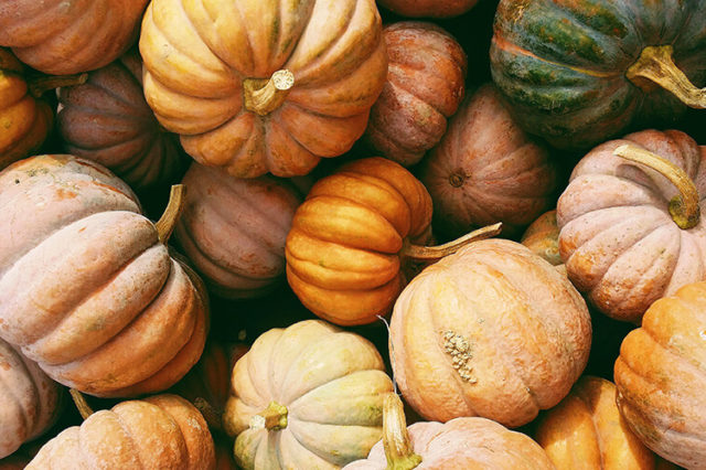 O&B Cafe Grill, Blue Mountain pumpkins